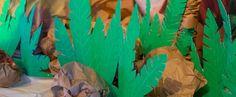 Vacation Bible School (VBS) 2018 Shipwrecked Green Corobuff - Pkg of 2 Safari Decorations, Room Decorations, Jungle Theme Classroom, Vbs Themes, Safari Theme, Jungle Safari, Jungle Room, Deco Nature, Le Roi Lion