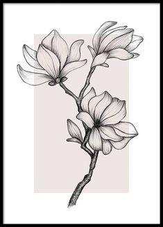 Illustration Blume, Botanical Illustration, Gold Poster, Flower Line Drawings, Drawing Flowers, Floral Drawing, Magnolia Flower, Modern Art Prints, Magnolias