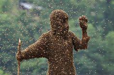 #Beekeeping Tips for Beginners