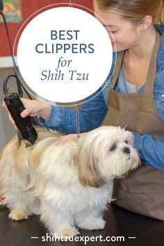 Best clippers for Shih Tzu – Buyer's Guide When I couldn't decide which dog clippers to buy for my Shih Tzu, I found this guide to be really useful because it's easy, simple to understand and VERY thorough. It has a list of budget friendly options. Dog Grooming Clippers, Dog Grooming Tips, Dog Grooming Styles, Chien Shih Tzu, Shih Tzu Puppy, Shih Tzus, Training Your Dog, Dog Care, Dog Friends