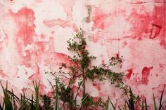 vines pink wall simple small