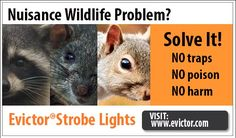 10 Best About Evictor Strobe Lights Images Get Rid Of