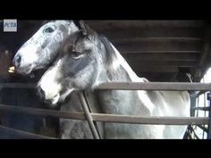 Every year, tens of thousands of magnificent American horses are crammed into livestock trailers and trucked to slaughterhouses in Canada and Mexico—and we may soon see slaughterhouses opening in states like New Mexico and Oklahoma.