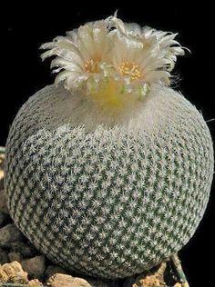 Sublime cactus