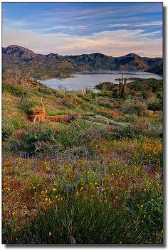 lush desert, Barrett Lake, Tonto National Forest, Arizona