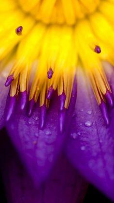 Purple Yellow Popculturez Ombre Detail Orange Et Bleu Deep