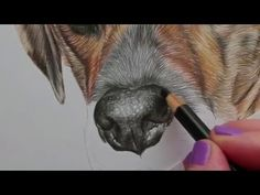Drawing Pencil Portraits - Drawing of nose tutorial coloured pencil partial time lapse Discover The Secrets Of Drawing Realistic Pencil Portraits Portrait Au Crayon, Pencil Portrait Drawing, Pencil Painting, Color Pencil Art, Drawing Fur, Dog Drawing Tutorial, Pencil Drawing Tutorials, Realistic Drawings, Cool Drawings