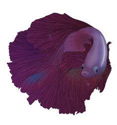 "Popatrz na ten projekt w @Behance: ""►Ryby / Fishes"" https://www.behance.net/gallery/36988121/Ryby-Fishes"
