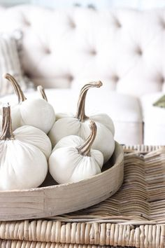 cute white pumpkins