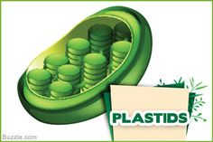 Basic Unit of Life: Plant Cell Structure and Functions