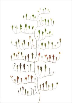 Lotta Olsson Dandelion Tree- love this concept. Not sure what her process is (can't understand the language of the site). But seems like a great way to do botanical diagrams & capture a plant's various stages and coloring.