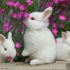 Cute bunnies in the flowers