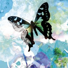 Butterflies, Posters and Prints at Art.com