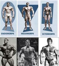 Endomorph and proud