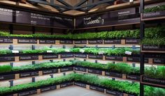 Leading Dutch supermarket Albert Heijn has created the Help Yourself herb garden for the ultimate in freshness, allowing customers to take just what they need. Organic Supermarket, Supermarket Design, Retail Store Design, Zero Waste Grocery Store, Produce Displays, Indoor Farming, Vegetable Shop, Organic Market, Fruit Shop