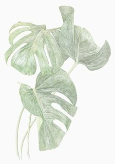 Monstera Print by Jonna Fransson 50 x 70