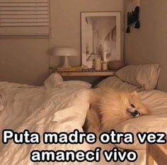 Cute Memes, Dankest Memes, Funny Memes, Pinterest Memes, Spanish Memes, Cartoon Memes, Mo S, Wholesome Memes, Mood Pics