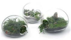 Making a DIY terrarium is a stylish and trendy garden project that is easy. Here is a simple tutorial on making and maintaining a terrarium garden in your home! Supplies: Glass container with open top... Read More