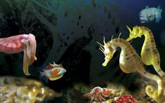 Seahorse World | Tasmania | Australia – Hold the wonders of the ocean in the palm of your hand.