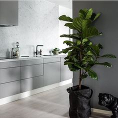 166.3k Followers, 1,147 Following, 1,975 Posts - See Instagram photos and videos from Scandinavian Lifestyling (@simple.form) Light Grey Kitchens, Cool Kitchens, Gray Kitchens, Kitchen Wall Colors, New Kitchen, Kitchen Wood, Kitchen Grey, Kitchen Plants, Kitchen Modern