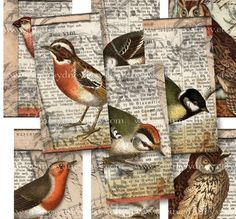 1 x 2 Inch Domino Tiles  Bird Owl Collages  Digital by ImageArts, $3.99