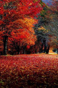 November...indian summer