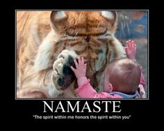 """Namaste - """"The spirit within  me honors the spirit within you"""" I read this article & saw this video when it 1st happened. It was THE most awe inspiring thing i've ever seen in my life! I could not stop my tears! The tiger just walked away, the child laughed, clapped her hands & happily skipped to her mom...So cool!!!"""