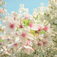 Poster | SPRING BLOSSOM von Cassia Beck | more posters at http://moreposter.de