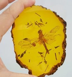 Beautiful amber dragonfly fossil insects 124g - http://collectibles.goshoppins.com/rocks-fossils-minerals/beautiful-amber-dragonfly-fossil-insects-124g/