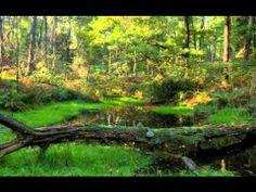 Johann Strauss II-Tales From The Vienna Woods(Geschichten aus dem Wienerwald) [FULL]