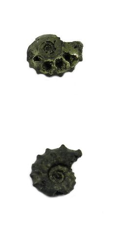 Ammonite 181078: 1Pcs Rare Product 22Mm Russian Pyrite Ammonite Fossil Jewelry Gemstone Gs00836 BUY IT NOW ONLY: $46.78