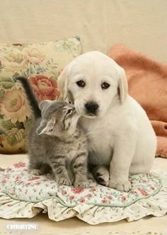 Puppy and kitten! So cute!