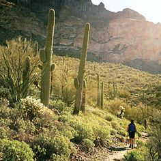Whether you are looking for an epic backpacking trip or a quick day hike, the Arizona Trail is perfect. The Southwest's answer to the Appalachian Trail, the Arizona Trail stretches from the state's Mexican border to Utah. While it would take months to hike its entire length, less ambitious hikers rejoice: The trail is conveniently broken into 43 sections. Head south from Superior on the Alamo Canyon section, and rest peacefully in town where comfy lodgings and good dining await.