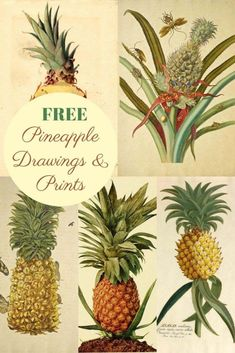 A fabulous collections of free pineapple drawings and pineapple wall art to download.  They would look great framed in the home as a welcome symbol.  #pineapple