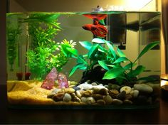 thinkin of upgrading betta to 5 gallon tank, i like the sand and rock combo.
