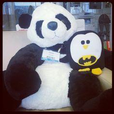 Google Panda Update i Google Penguin Update
