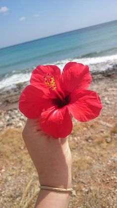 """""""The happiest people are the givers, not the takers! Hibiscus Flowers, Tropical Flowers, Exotic Flowers, Beautiful Flowers, Ocean Wallpaper, Tumblr Wallpaper, Flower Wallpaper, Gold Wallpaper, Fred Instagram"""