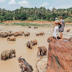 Elephant orphanage in Sri Lanka..  Who would you visit with? #yourtravelblog   #Travel the world with us!  by yourtravelblog