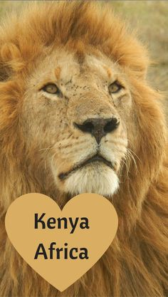 Embarking on a adventure in the African bush? Well then, check out this 10 day amazing Kenya itinerary before you travel which covers the best safari parks in Kenya, Africa!