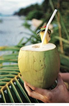 Green Coconut Perfume Gift for Teen Coconut Lotion Tropical Moisturizer Coconut Bath Salts Coconut Lotion, Coconut Beach, Coconut Water, Puerto Rico, Photo Fruit, Recetas Salvadorenas, Coconut Drinks, Coconut Desserts, World Cultures