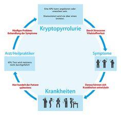 Kryptopyrrolurie Kreislauf Chart, Map, Adhd Causes, Children's Medicine, Holistic Practitioner, Medical, Primary School, Location Map, Cards