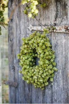 Hops wreath