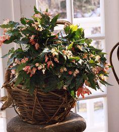 Indoor flower plants