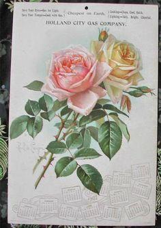 1907---shabby boho chic roses...Paul de Longpre...