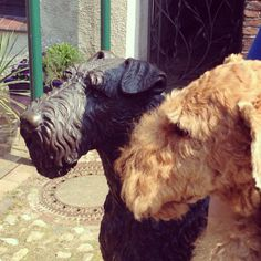 Neat Airedale statue!