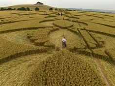Find out more about 'The Crop Circle Wars' and the woman hoping to bring people together in Wiltshire Life's September issue, out on Thursday August 1. Pictured: Crop circle at Woodborough by Janet Ossebaard