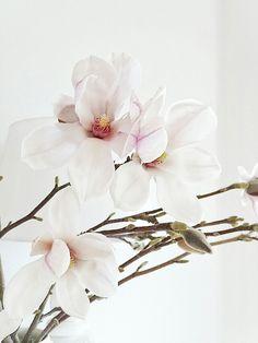 Auf der Mammilade|n-Seite des Lebens: Magnolienliebe, -deko & blühende Vanille-Amerikaner mit Tonkabohne