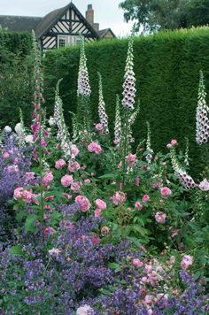 Lovely cottage border with hedge backdrop