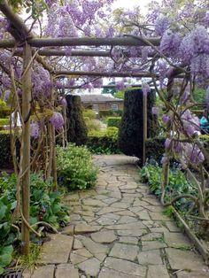 Guia de jardin. Blog de jardinería y plantas. Jardín en casa.: Jardines con glicinias (Wisteria) alrededor del mundo