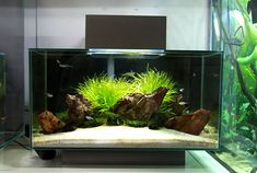 Fluval Edge shop displays | AquaScaping World Forum - http://www.aquascapingworld.com/threads/fluval-edge-shop-displays.6073/